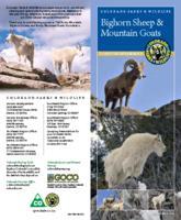 Bighorn sheep & mountain goats : Colorado's mountain monarchs