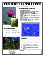 Plumeless thistle : carduus acanthoides
