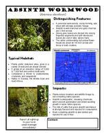 Absinth wormwood : artemisia absinthium