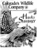 The hawks of summer