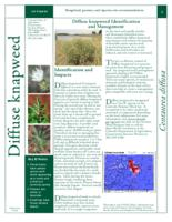 Diffuse knapweed identification and management