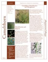 Camelthorn identification and management