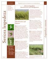 Sericea lespedeza identification and management