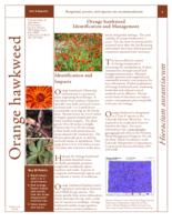Orange hawkweed identification and management