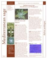 Mediterranean sage identification and management