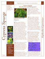 Cypress spurge identification and management