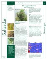 Saltcedar identification and management