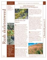 Rush skeletonweed identification and management