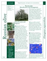 Russian olive identification and management